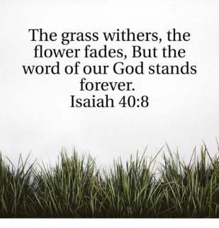 the-grass-withers-the-flower-fades-but-the-word-of-19000133